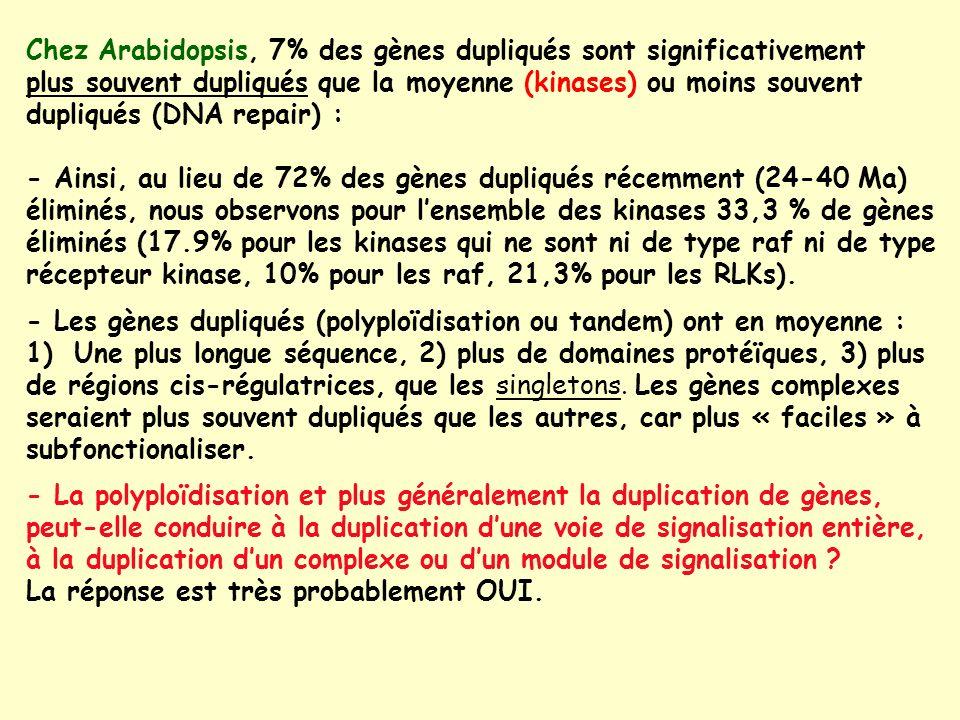 Chez Arabidopsis, 7% des gènes dupliqués sont significativement