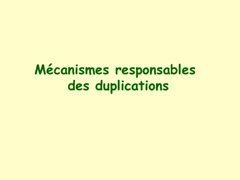 Mécanismes responsables