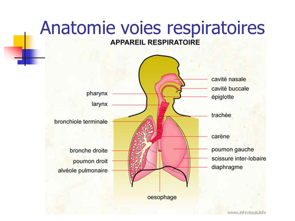 Anatomie voies respiratoires