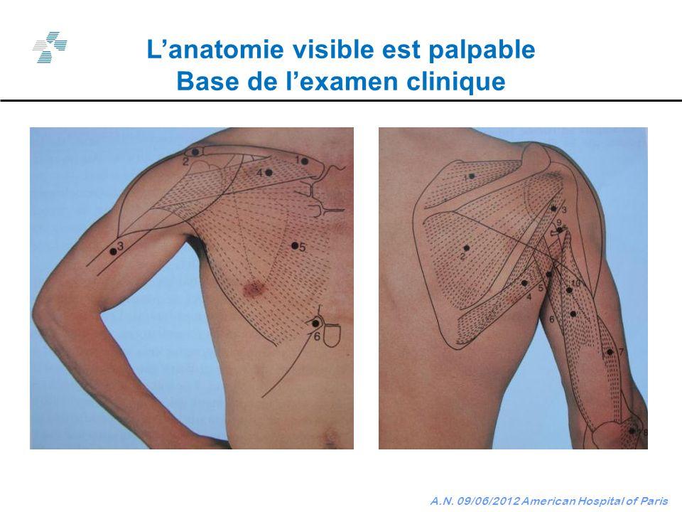 L'anatomie visible est palpable Base de l'examen clinique