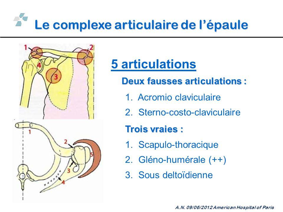 Le complexe articulaire de l'épaule