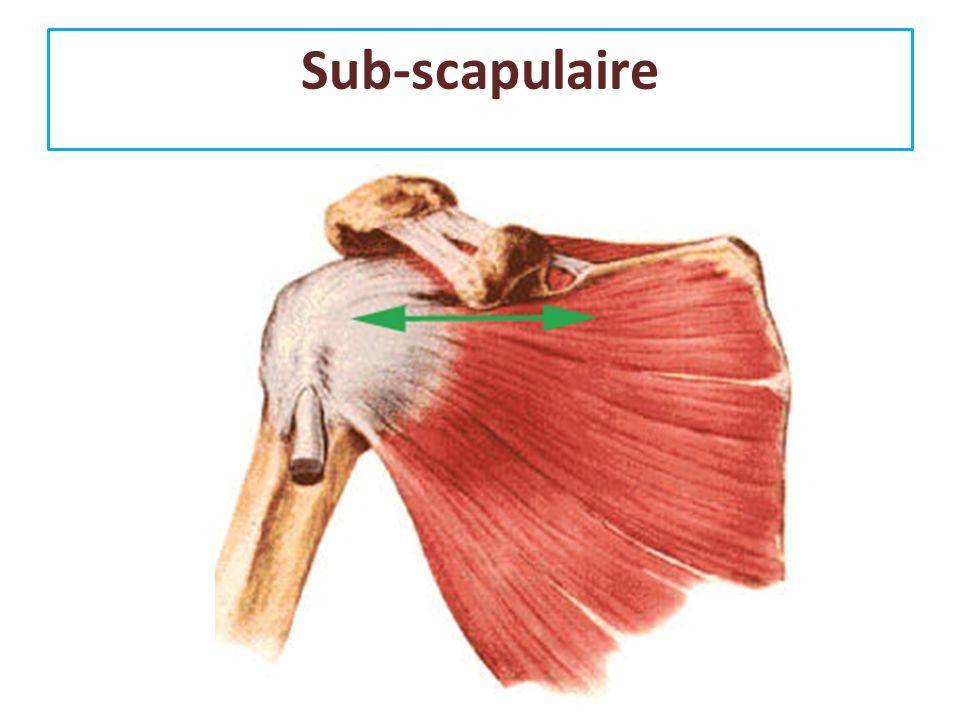 Sub-scapulaire