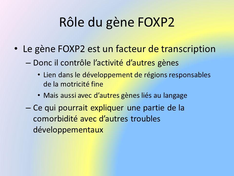 Rôle du gène FOXP2 Le gène FOXP2 est un facteur de transcription