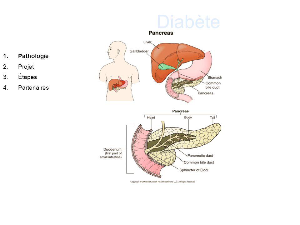 Diabète Pathologie Projet Étapes Partenaires . 15