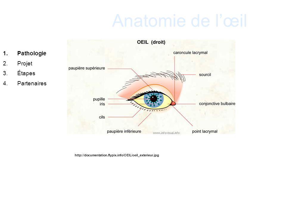 Anatomie de l'œil Pathologie Projet Étapes Partenaires 18 .