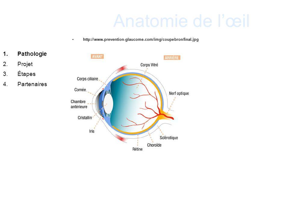 Anatomie de l'œil Pathologie Projet Étapes Partenaires 19
