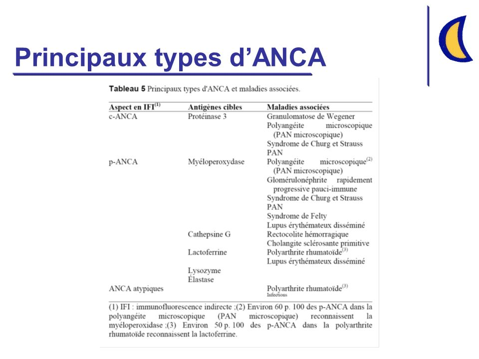 Principaux types d'ANCA
