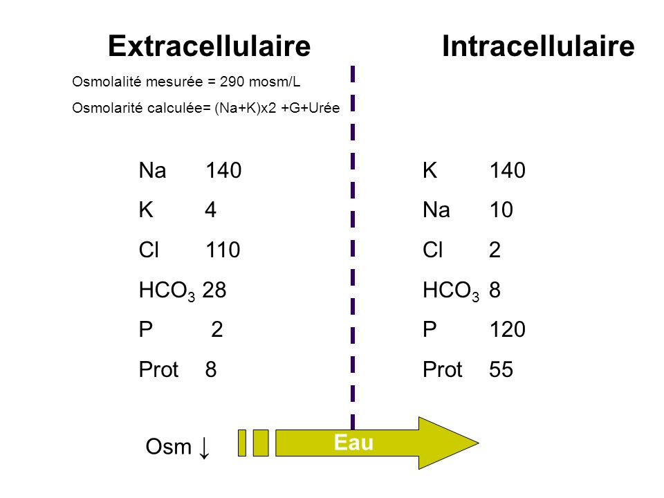 Extracellulaire Intracellulaire