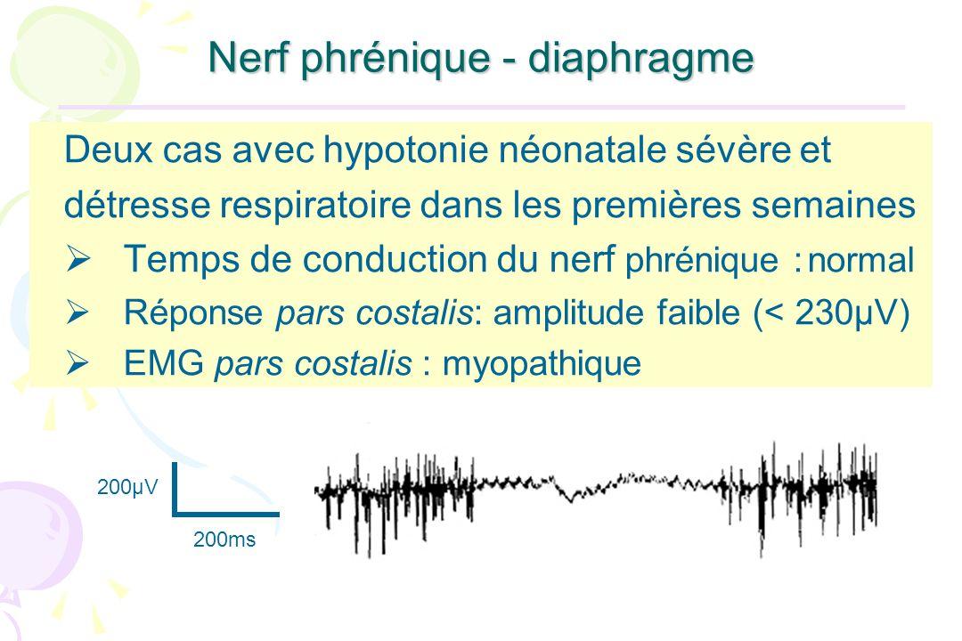 Nerf phrénique - diaphragme