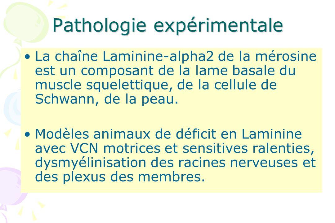 Pathologie expérimentale