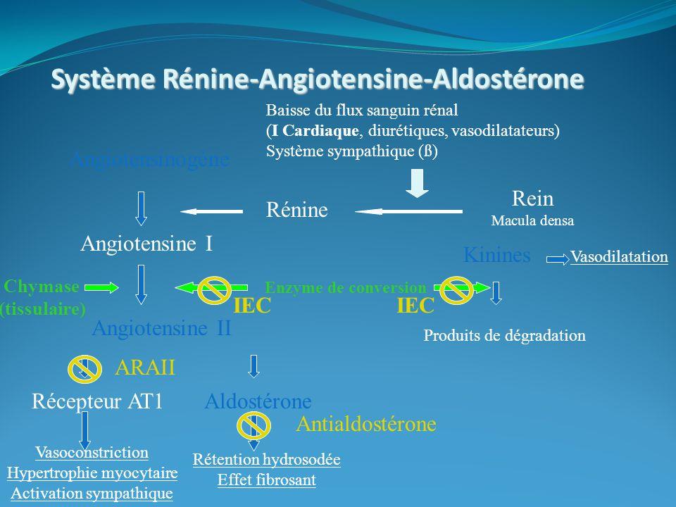 Système Rénine-Angiotensine-Aldostérone