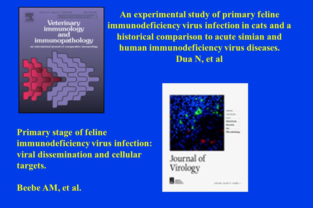 An experimental study of primary feline immunodeficiency virus infection in cats and a historical comparison to acute simian and human immunodeficiency virus diseases. Dua N, et al