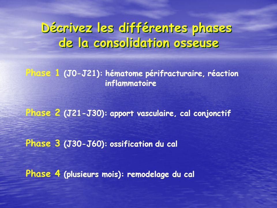 Décrivez les différentes phases de la consolidation osseuse