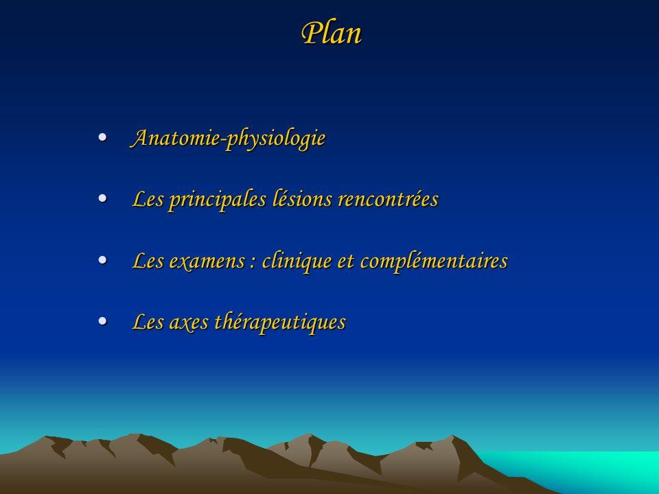 Plan Anatomie-physiologie Les principales lésions rencontrées
