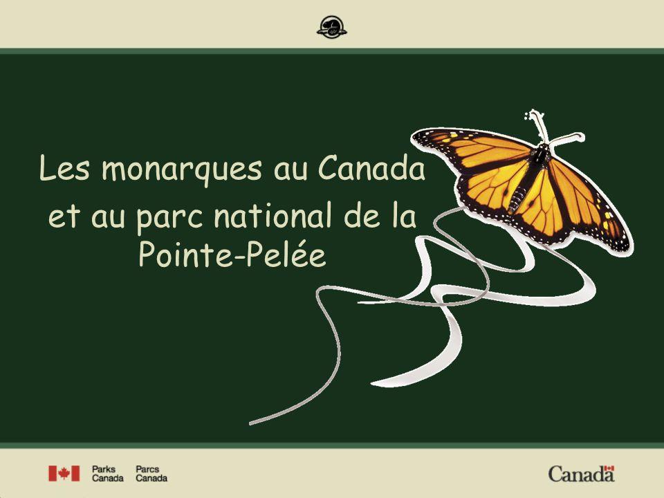 Les monarques au Canada et au parc national de la Pointe-Pelée