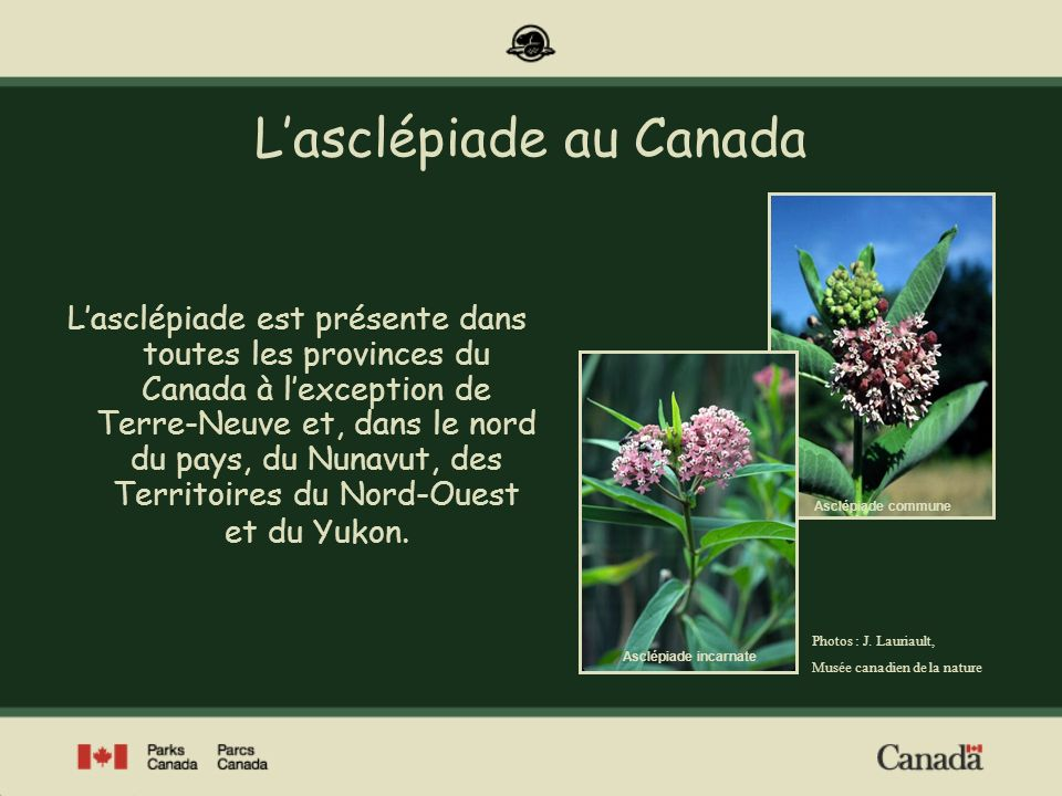 L'asclépiade au Canada