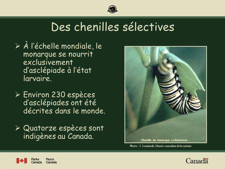 Des chenilles sélectives