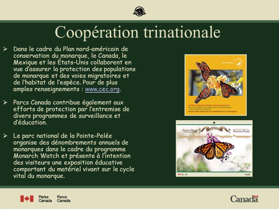 Coopération trinationale