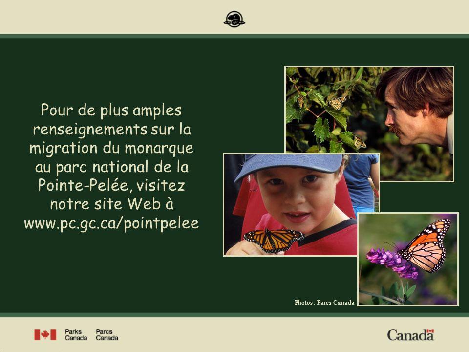 Pour de plus amples renseignements sur la migration du monarque au parc national de la Pointe-Pelée, visitez notre site Web à www.pc.gc.ca/pointpelee
