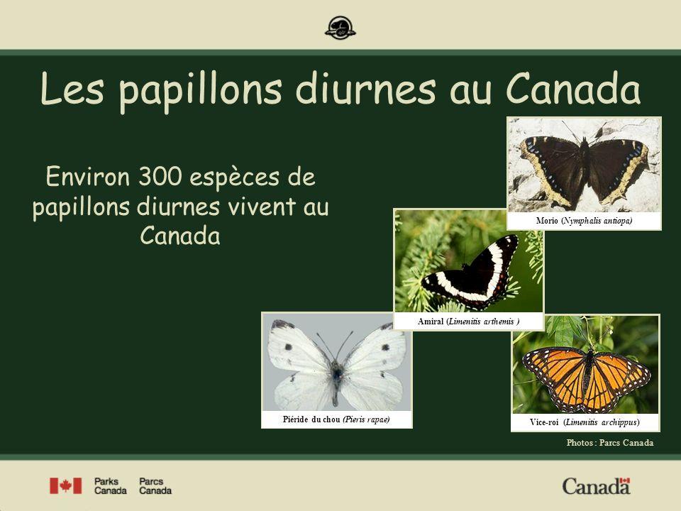 Les papillons diurnes au Canada