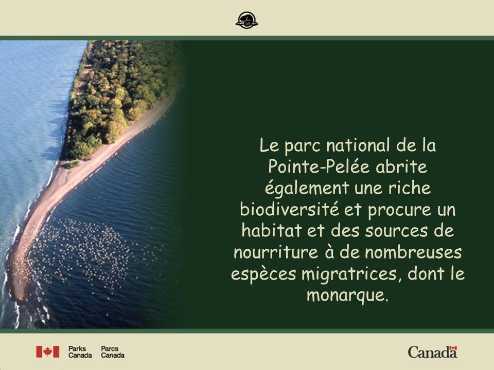 Le parc national de la Pointe-Pelée abrite également une riche biodiversité et procure un habitat et des sources de nourriture à de nombreuses espèces migratrices, dont le monarque.