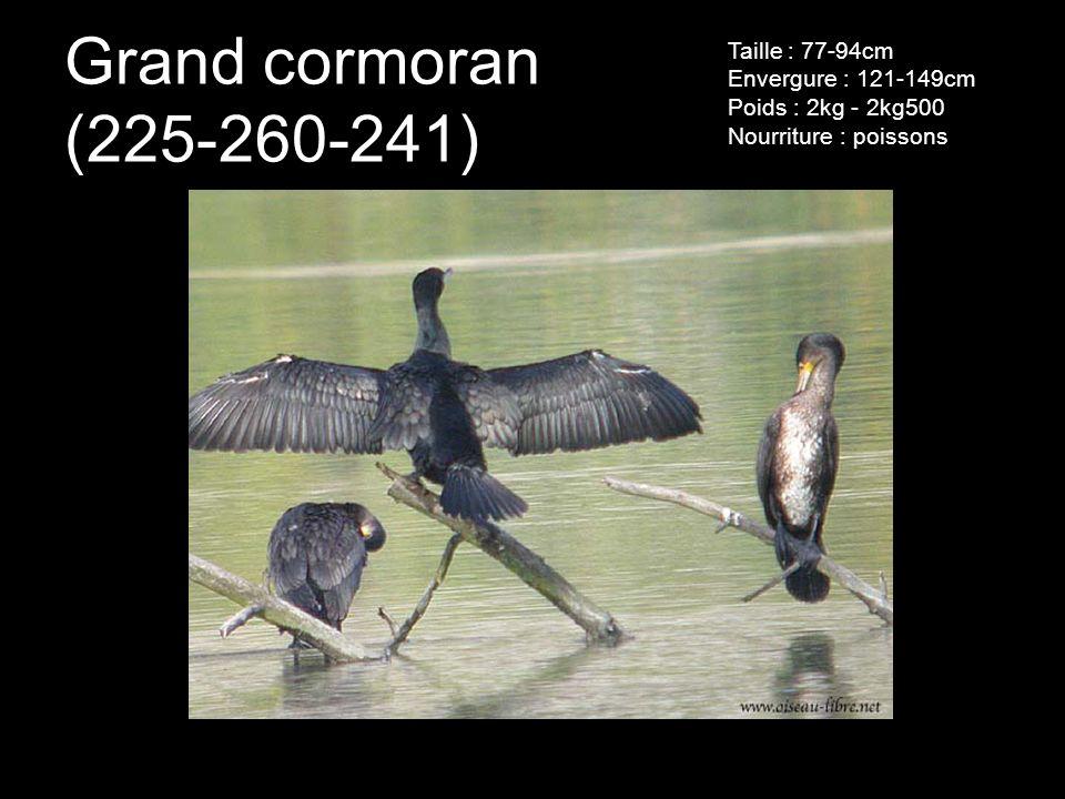 Grand cormoran (225-260-241) Taille : 77-94cm Envergure : 121-149cm Poids : 2kg - 2kg500 Nourriture : poissons.