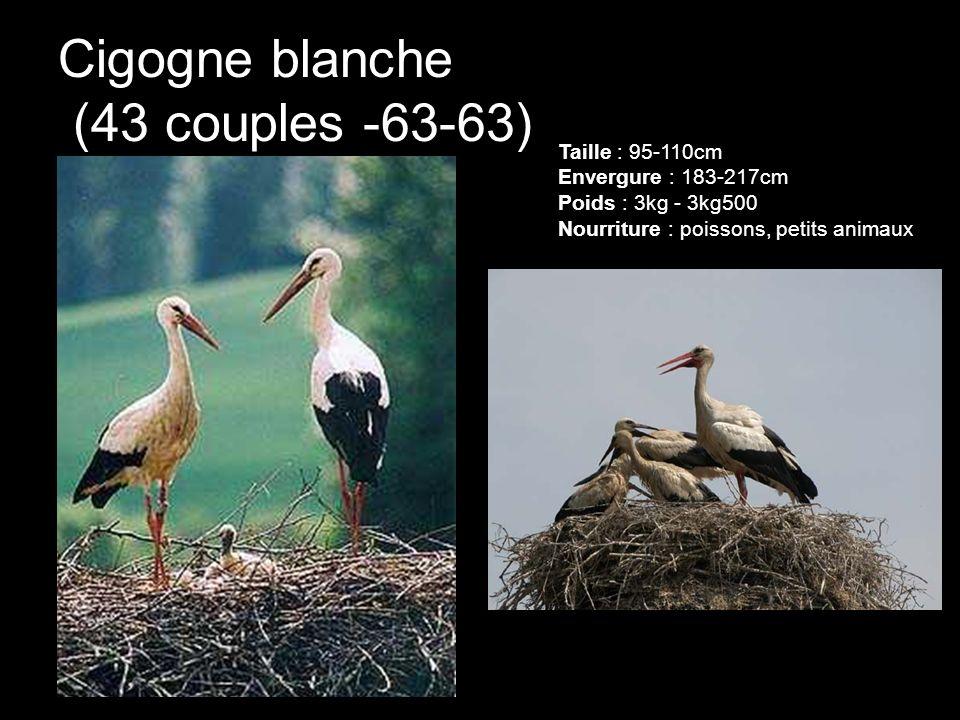 Cigogne blanche (43 couples -63-63)