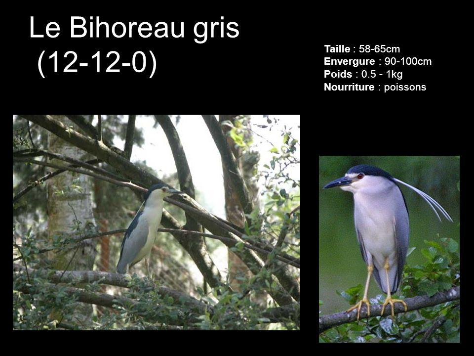 Le Bihoreau gris (12-12-0) Taille : 58-65cm Envergure : 90-100cm Poids : 0.5 - 1kg Nourriture : poissons.