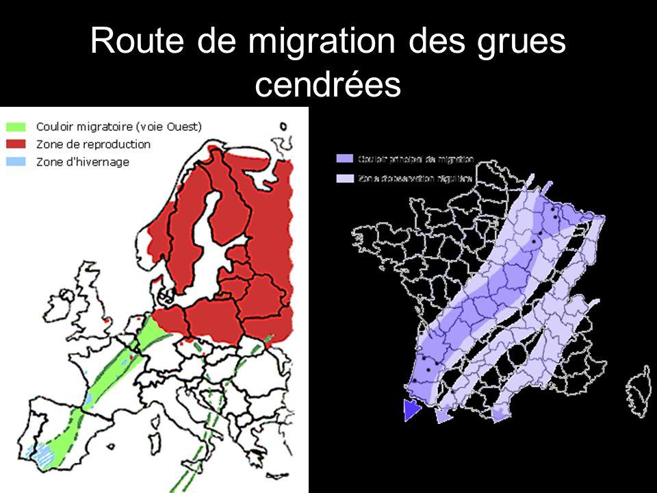 Route de migration des grues cendrées