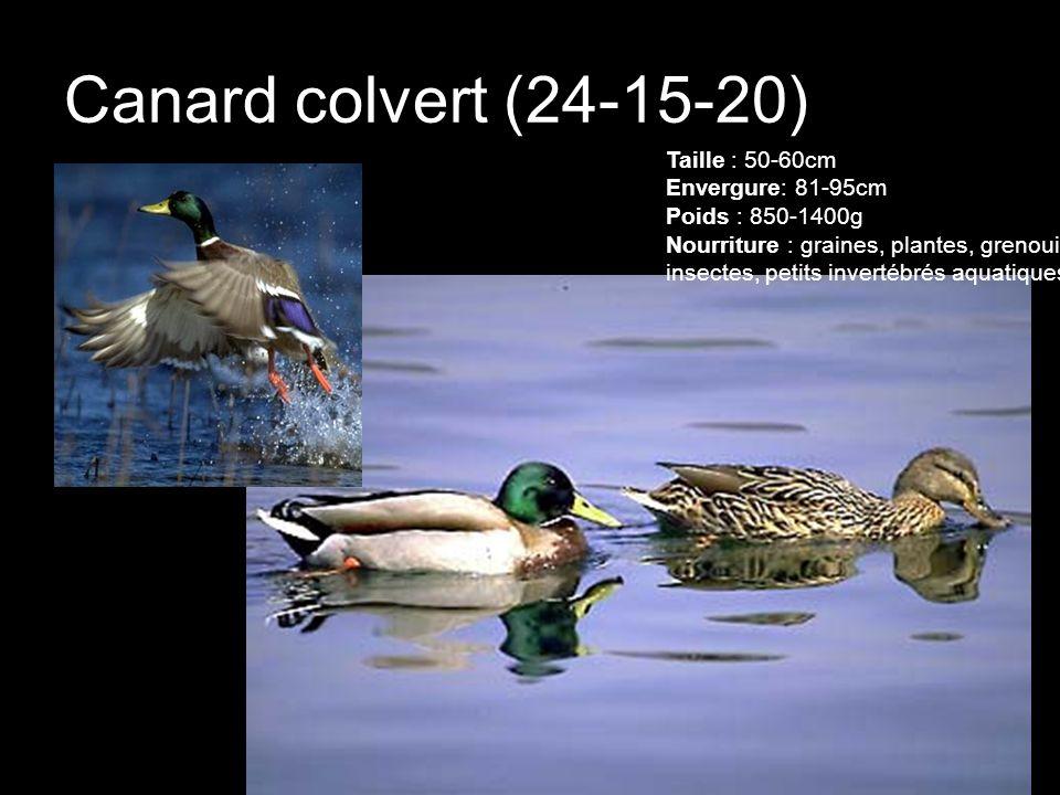 Canard colvert (24-15-20)