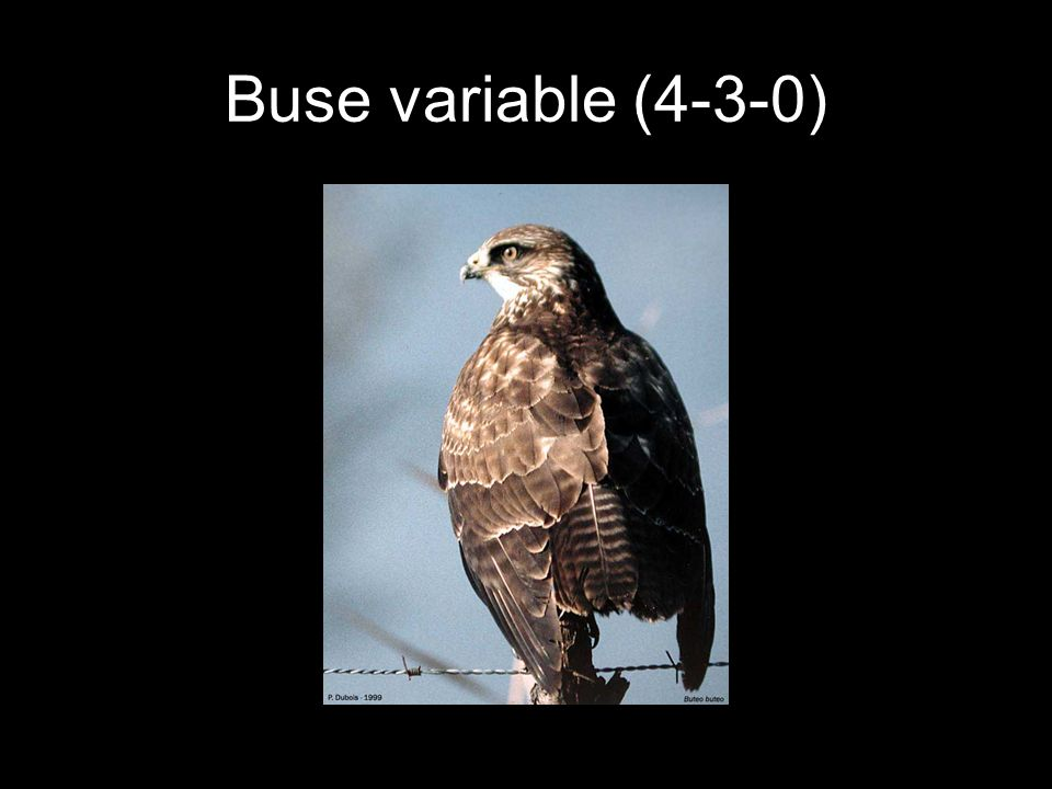 Buse variable (4-3-0)