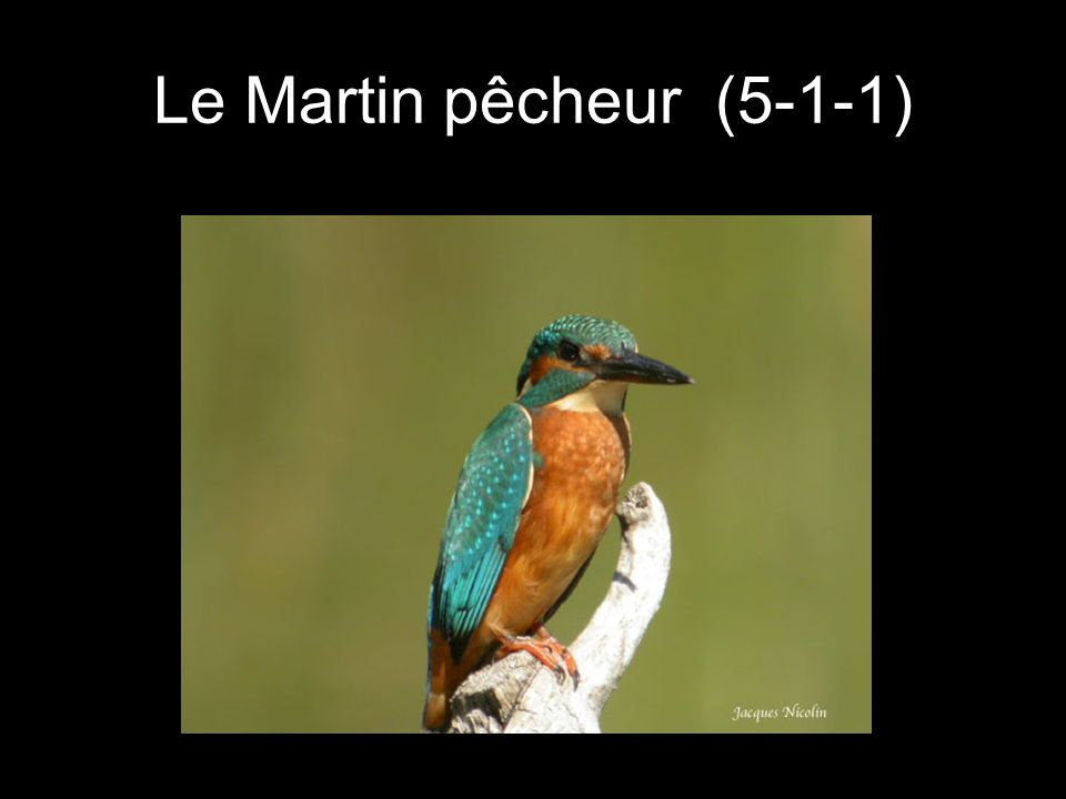Le Martin pêcheur (5-1-1)