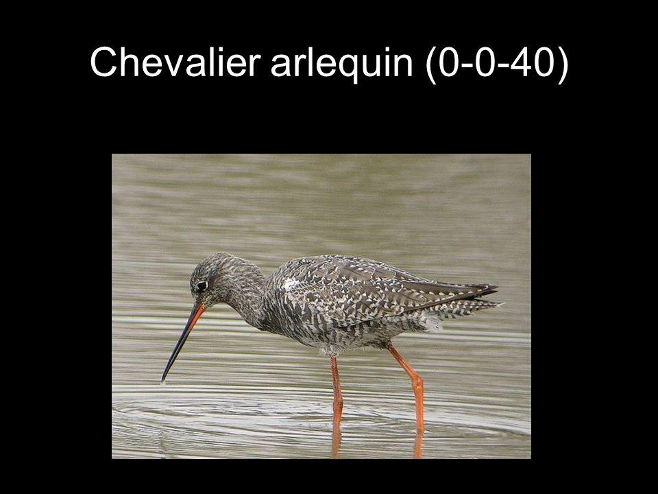 Chevalier arlequin (0-0-40)