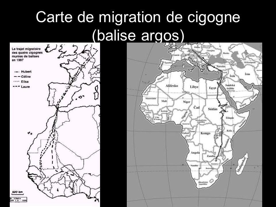 Carte de migration de cigogne (balise argos)