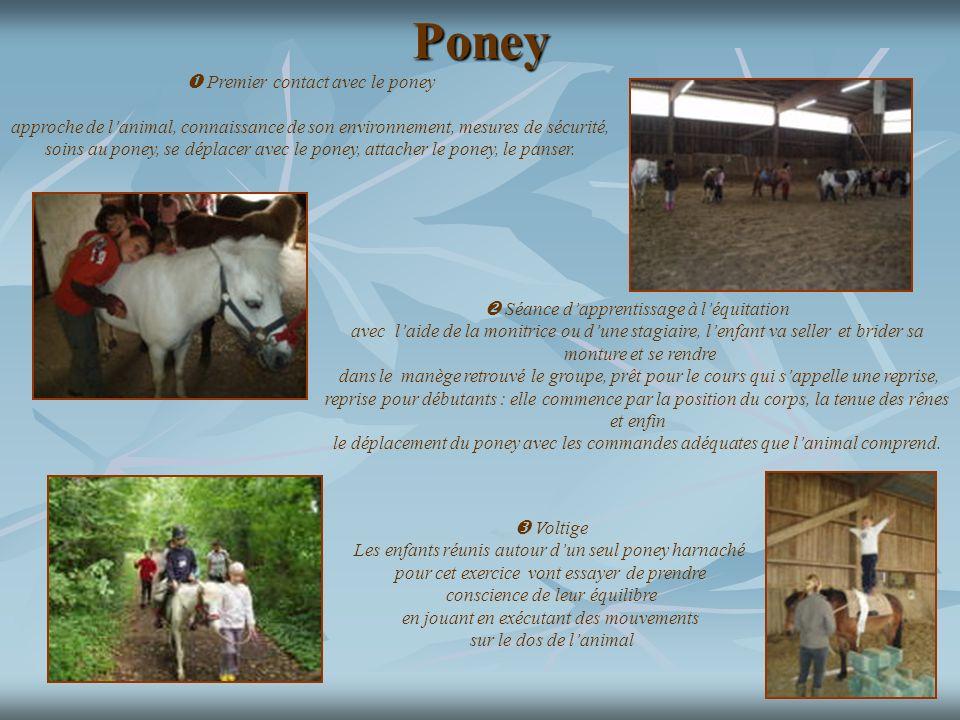Poney  Premier contact avec le poney