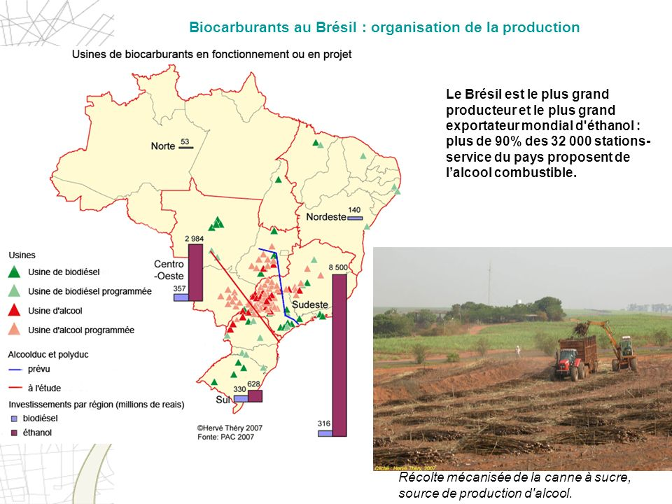 Biocarburants au Brésil : organisation de la production