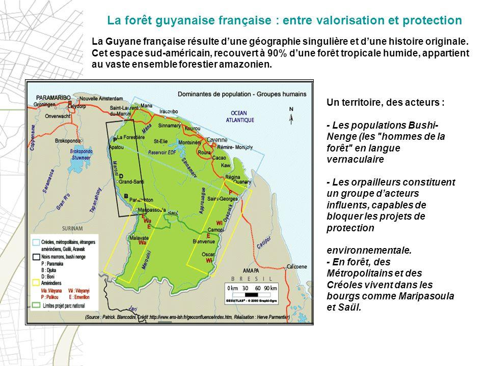 La forêt guyanaise française : entre valorisation et protection