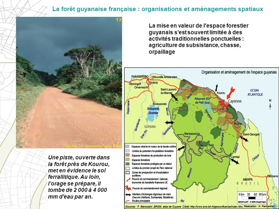 La forêt guyanaise française : organisations et aménagements spatiaux