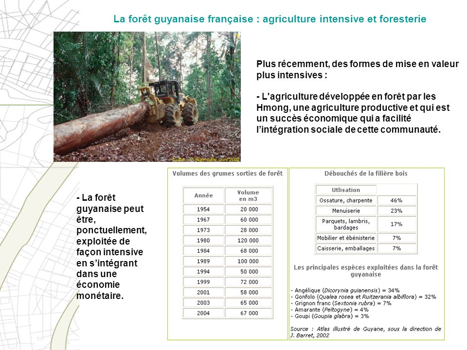 La forêt guyanaise française : agriculture intensive et foresterie