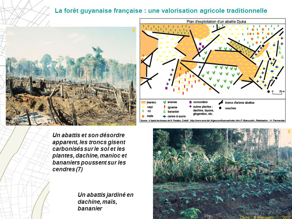 La forêt guyanaise française : une valorisation agricole traditionnelle