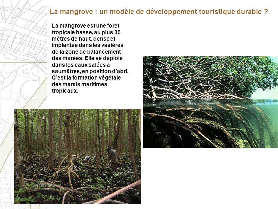 La mangrove : un modèle de développement touristique durable