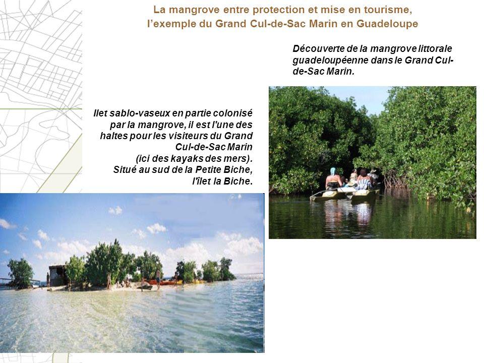 La mangrove entre protection et mise en tourisme, l'exemple du Grand Cul-de-Sac Marin en Guadeloupe