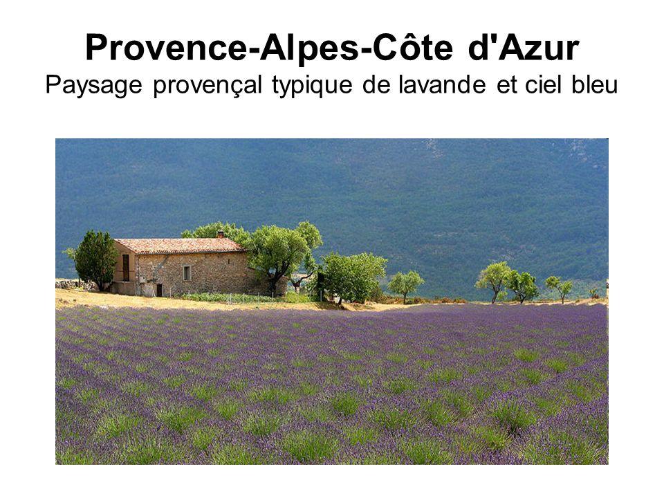 Provence-Alpes-Côte d Azur Paysage provençal typique de lavande et ciel bleu