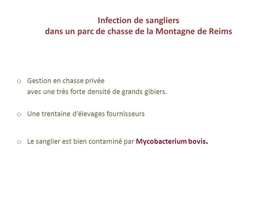 Infection de sangliers dans un parc de chasse de la Montagne de Reims