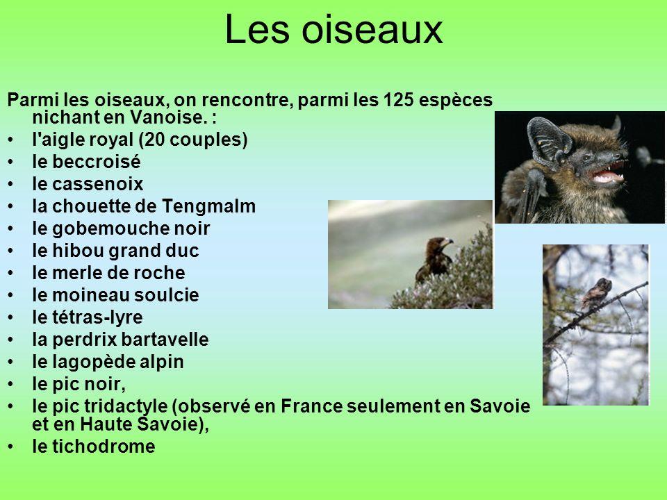 Les oiseaux Parmi les oiseaux, on rencontre, parmi les 125 espèces nichant en Vanoise. : l aigle royal (20 couples)