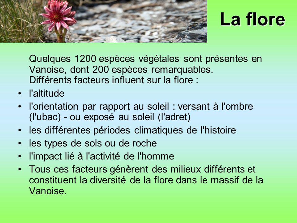 La flore Quelques 1200 espèces végétales sont présentes en Vanoise, dont 200 espèces remarquables. Différents facteurs influent sur la flore :