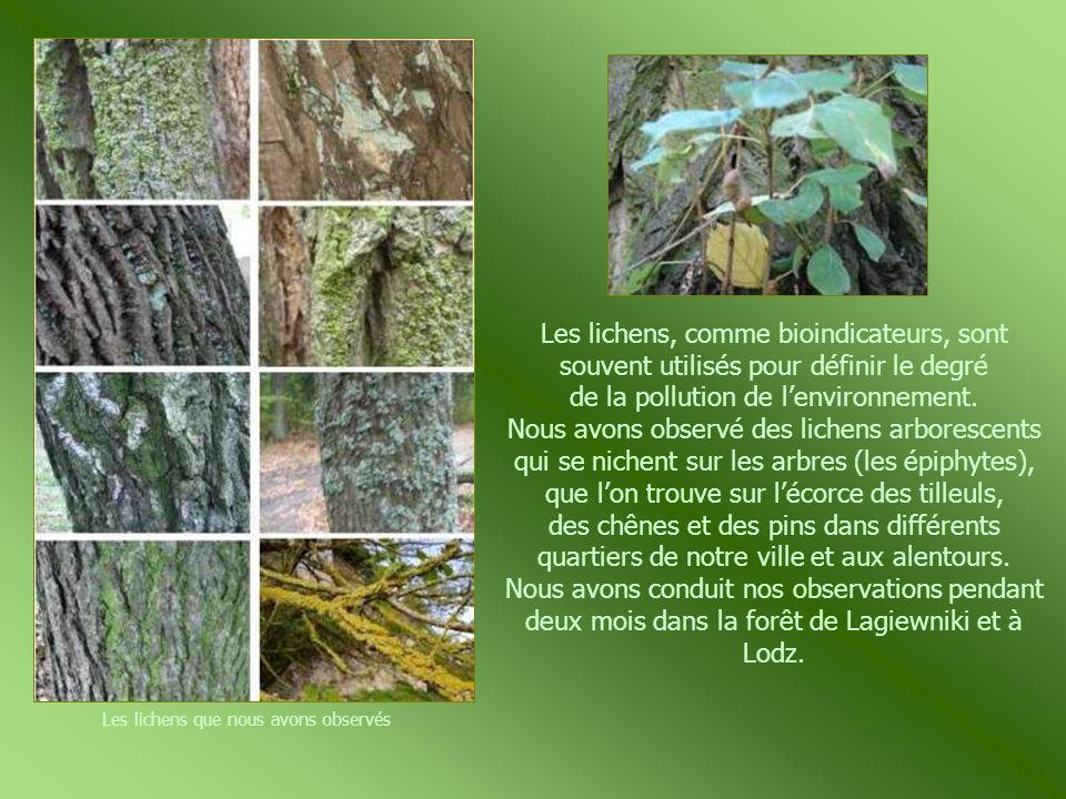Les lichens que nous avons observés