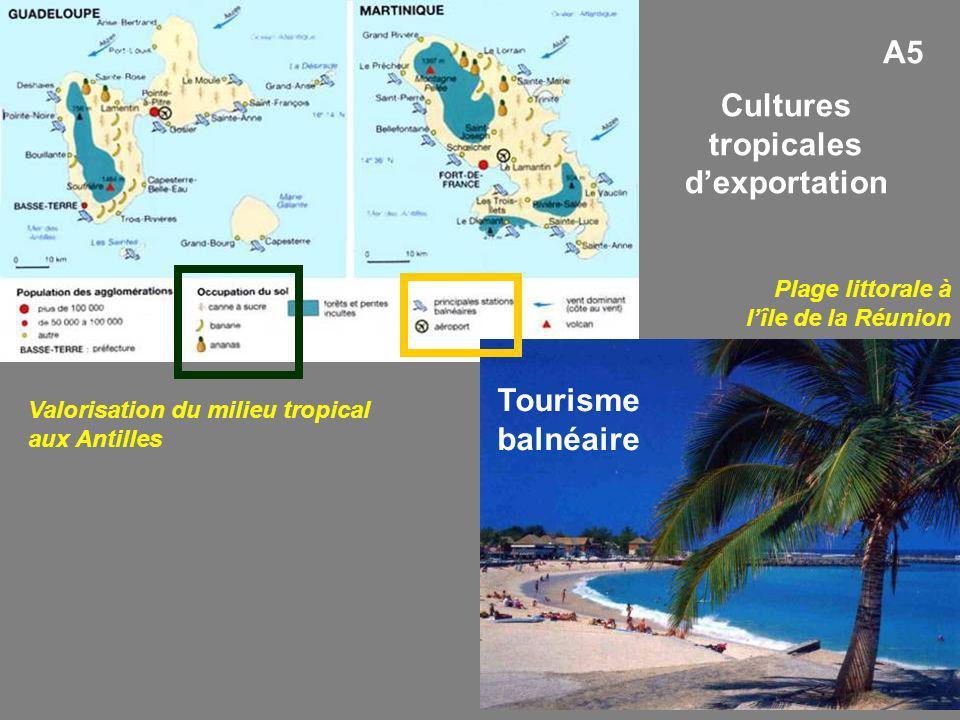 Cultures tropicales d'exportation