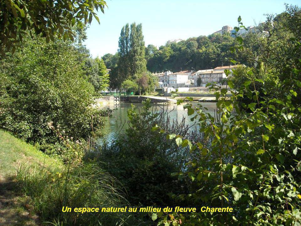 Un espace naturel au milieu du fleuve Charente