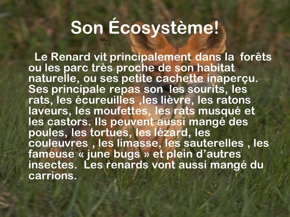 Son Écosystème!